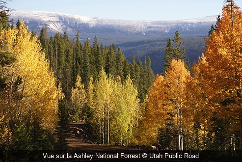 Vue sur la Ashley National Forrest Utah Public Road