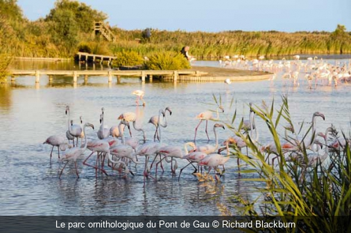 Le parc ornithologique du Pont de Gau Richard Blackburn
