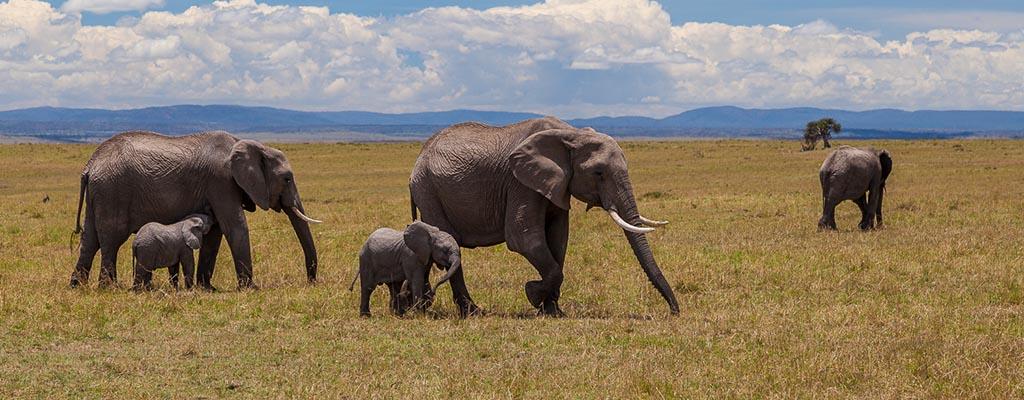 Kenya : au paradis des safaris